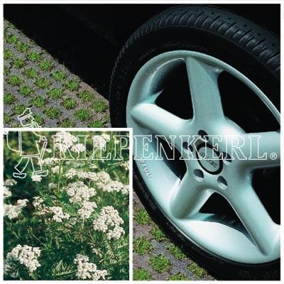 Kiepenkerl RSM 5.1.1 Parkplatzrasen mit 2 % Achillea 10kg
